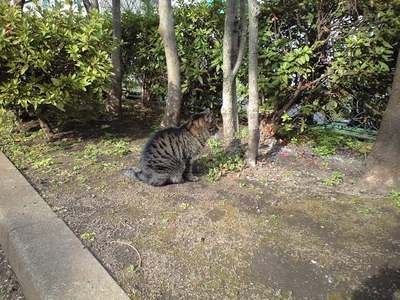 三軒茶屋の野良猫