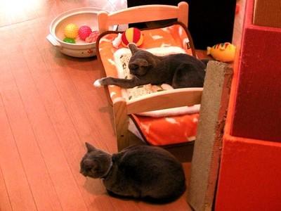 渋谷の猫カフェ ハピ猫