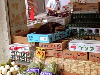 椎名町の八百屋猫