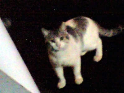 椎名町の野良猫